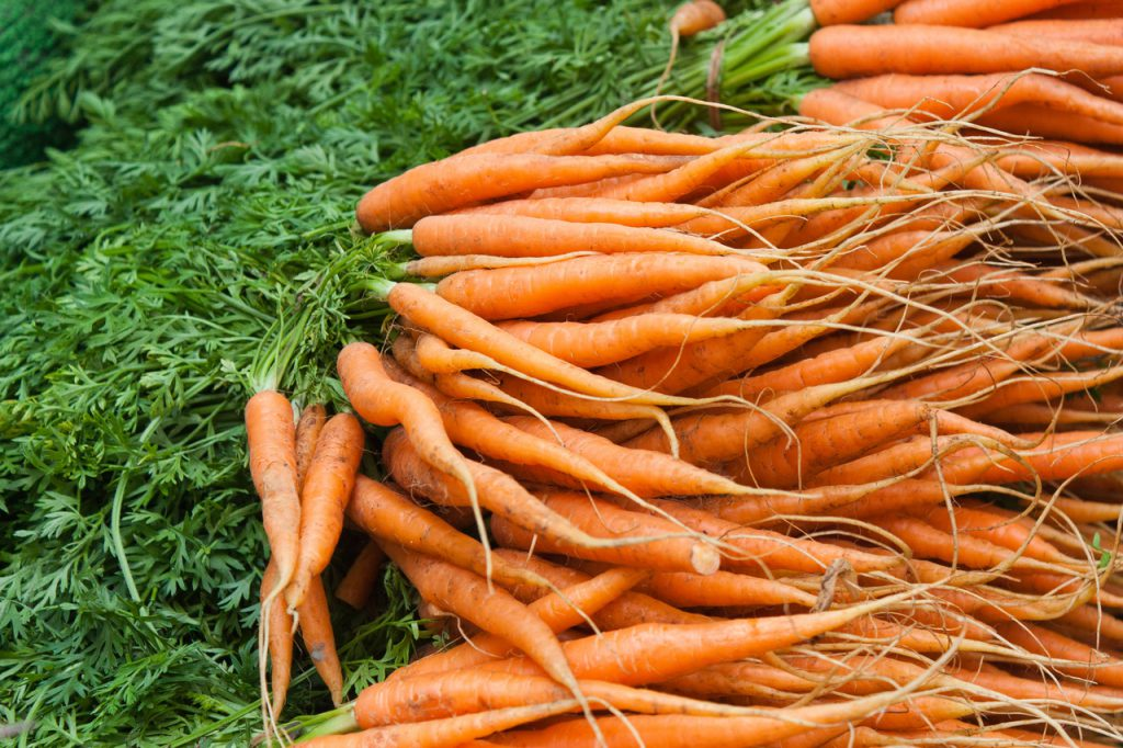 A sárgarépa táplálása Agromasterrel, főkép