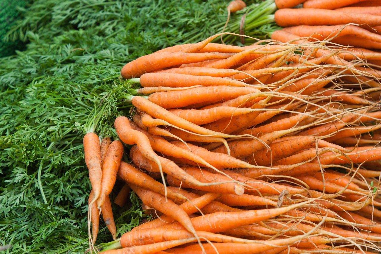 A sárgarépa táplálása Agromasterrel, post image