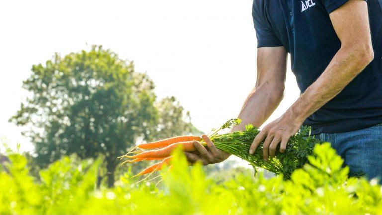sárgarépa táplásása agromasterrel