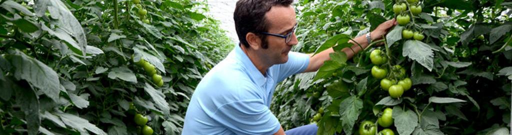 Zöldségtermesztés, főkép
