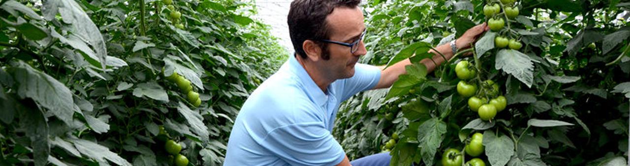 Zöldségtermesztés, post image