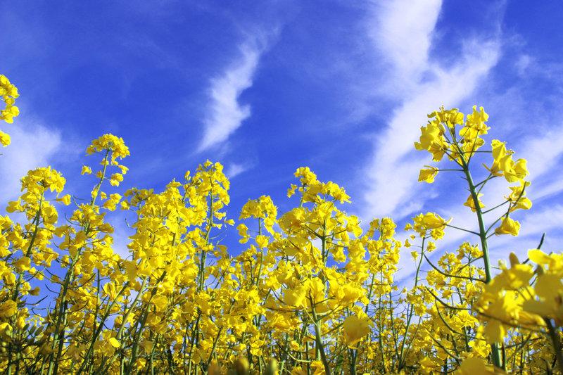 Áttelelő növények lombtrágyázása, főkép