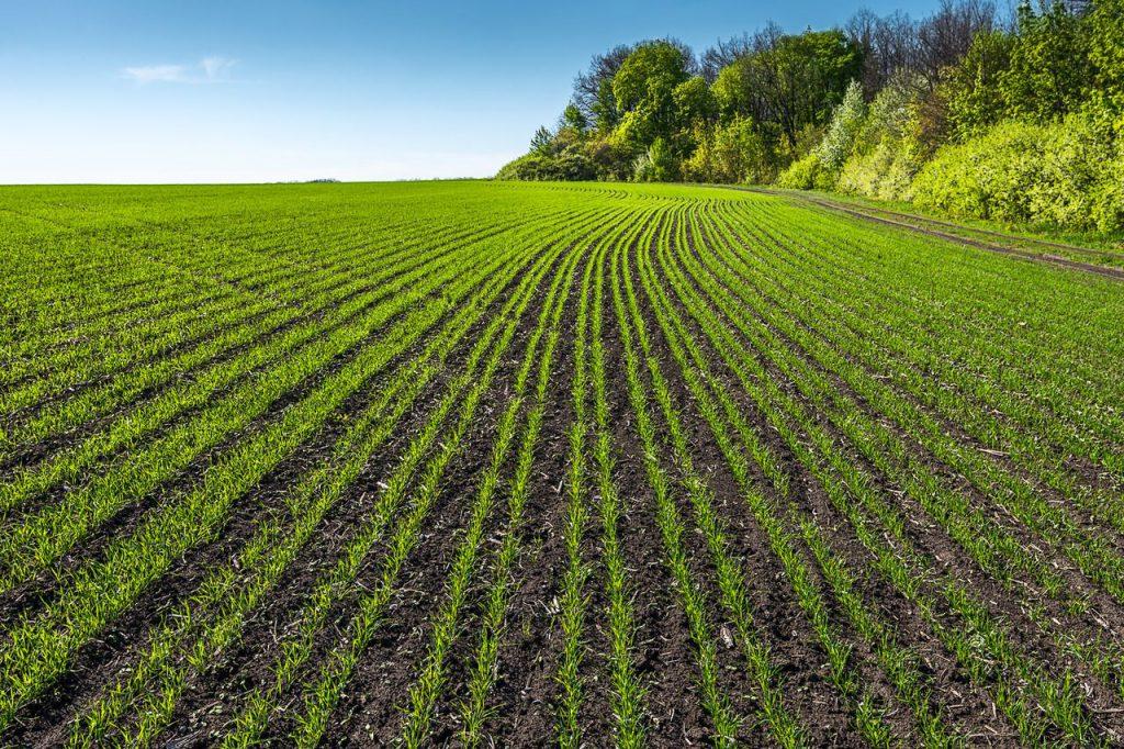 Télállóság növelése: szántóföldi növények őszi táplálása, főkép